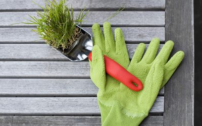 5 Ridiculously Effective Tools for Sowing your Nonprofit's Social Media Roots